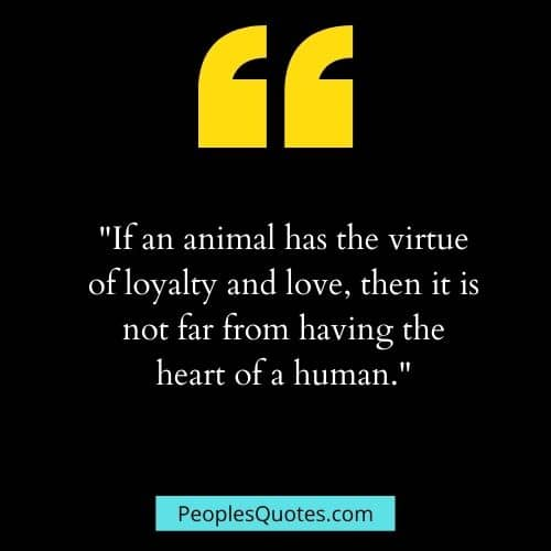 quotes for animal love and loyalty